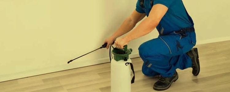 Best Pest Control Ainslie